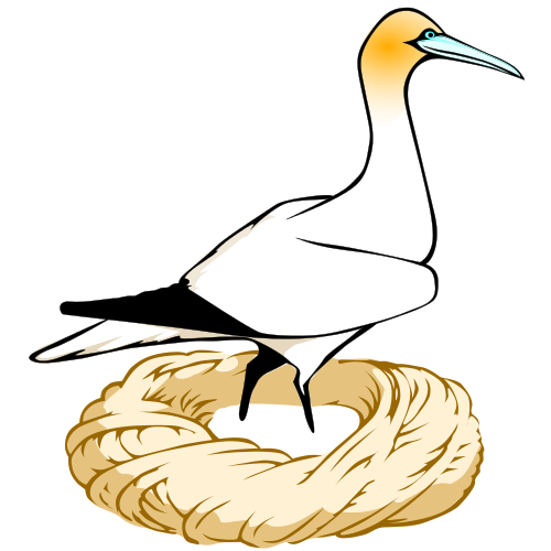 drawing of a gannet standing in a yarn nest